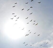 Ibis birds flying into the Sun by Coralie Plozza