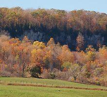 Hillside Splendor by sundawg7
