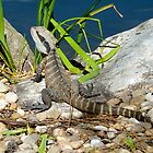 water monitor by SUBI