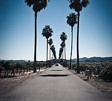 Napa Valley Winery by Chris Muscat