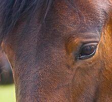 Beautiful horses . Tributet to Ewangelos Odysseas Papathanasiu (Vangelis). Brown Sugar StoryBook. Forever  !!!! by © Andrzej Goszcz,M.D. Ph.D