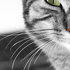 Cat's Whiskers by simpsonvisuals