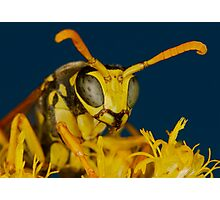 Natural Beeauty  Photographic Print