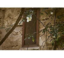 Garden Window, Lecce, IT Photographic Print