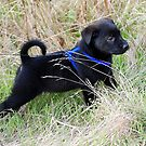Little puppy by Barbara Anderson