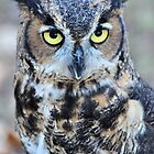 Great Horned Owl by Jeff Ore