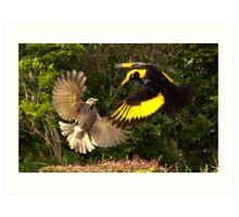 Pair of Regent Bower Birds, Lamington NP,Australia Art Print