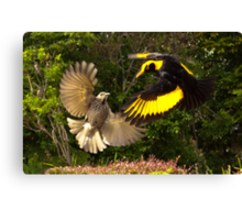 Pair of Regent Bower Birds, Lamington NP,Australia Canvas Print