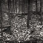 Autumn in the Grove by Aaron Bottjen