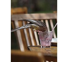 Red Wattle Bird Having a Milkshake. Photographic Print