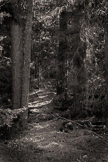 Dark Path by Aaron Bottjen