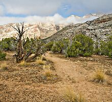 Split Mountain Path by Kim Barton