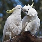 Sulphur-crested Cockatoos ~ &quot;I love you too&quot; by Robert Elliott