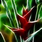 Heliconia by Neill