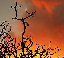 October Orange  by Aaron Baker