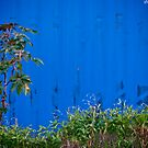 blue weeds by steen