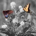 Butterflies gathering nectar by DaveMoffatt
