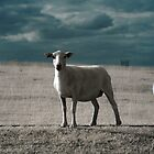 Gaz&#x27;s Sheep [IR] by George Parapadakis (monocotylidono)
