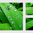 Rain Drops - In The Garden After Rainfall by dawnandchris