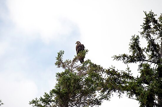 Surveying my domain by Mark Prior