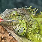 Bearded Dragon ~ Not The Mother-In-Law!! by Sandra Cockayne
