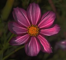 Floral in Autumn by Dennis Rubin IPA