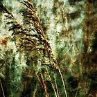 Sea Oats on the Beach by Phillip  Judy