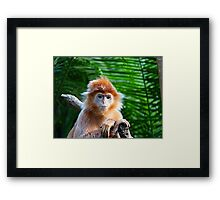 GUESS WHO WON THE STARING CONTEST? Framed Print