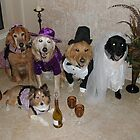 The Real Housedogs of New Braunfels 2010 by LyndaE