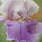 ~ Iris ~ by Lorraine Creagh