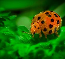 Lady Bug by Liza Yorkston