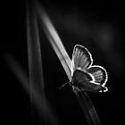 Wings IV by AndreeaGogu