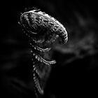 Darker than black I by AndreeaGogu