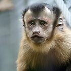 Capuchin Monkey by Leanne Allen