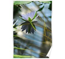 The Water Lily Series #2 Poster