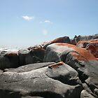 Tasmanian Shoreline by Ross Campbell