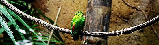 Bird On The Wire by ninadangelo