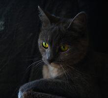 Halloween Cat by CitC