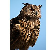European Eagle Owl Photographic Print