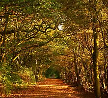 Autumn Avenue by Paul Bettison