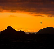 Sunset of Flat Top Island along the south coast of Tasmania by andychiz