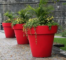 Three Red Flower Pots in Old Quebec City by Laurel Talabere