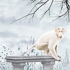 Snow Monkey by AroonKalandy