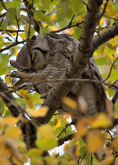Owl Yoga by JamesA1