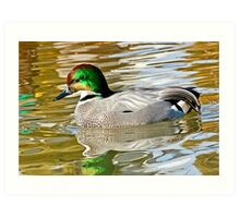 Falcated Duck Art Print