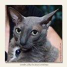 cat calendar image #4 Gremlin, by name and nature  by Odille Esmonde-Morgan
