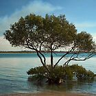 Mangrove Tree at High Tide by Kym Howard