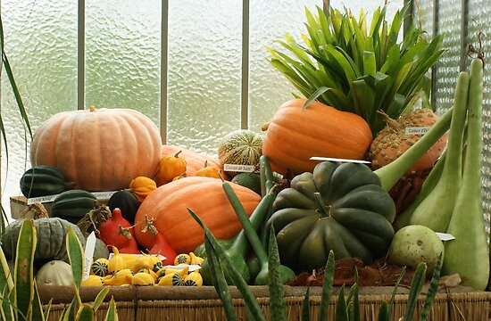 autumn harvest 2 by Fran E.