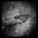 Bye Bye Birdy by Steve Lovegrove