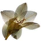 paper petals II by elisabeth tainsh